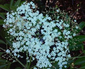 may 10 brevity32_crop