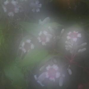 fuzzyflowers